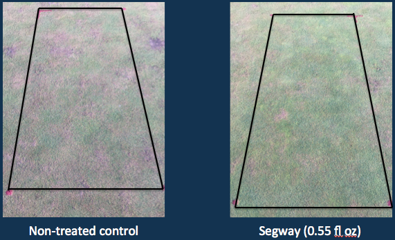 Curative Pythium root rot control demonstrated at a lower rate with Segway, which illustrates the effectiveness of the product at lower rates