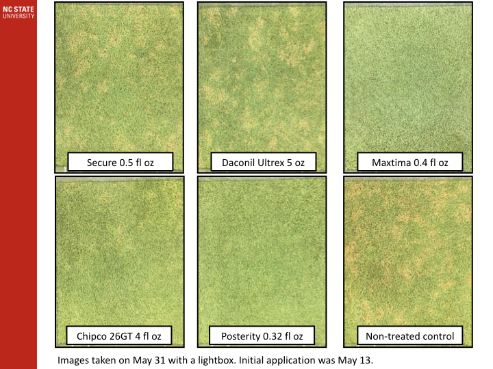 Grass Samples with fungicide application