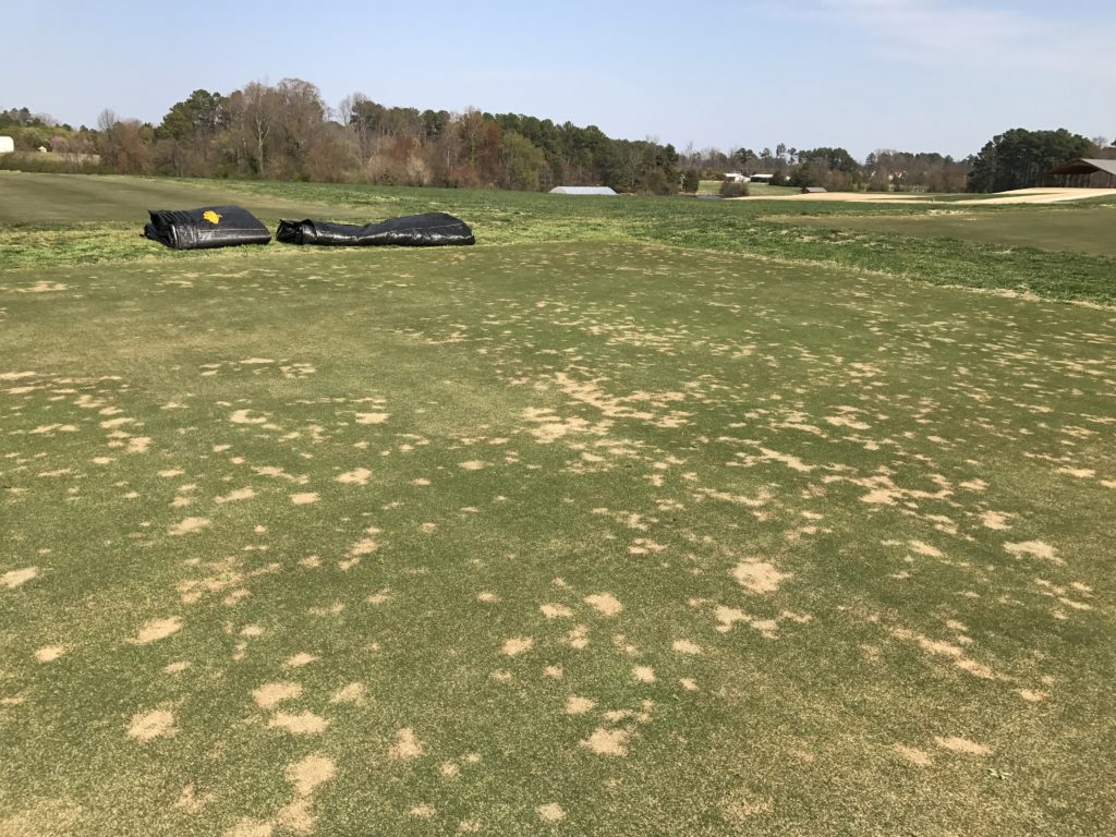Spring dead spot symptoms in an ultradwarf bermudagrass putting green.