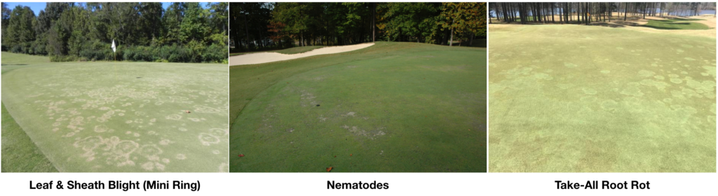 Image of turfgrass profiles