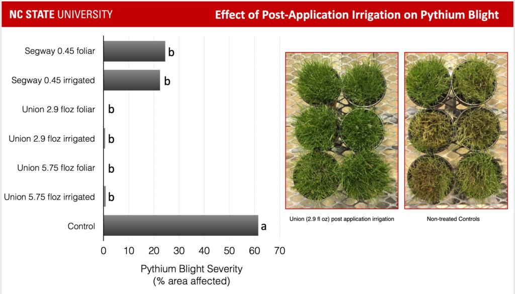 Pythium blight