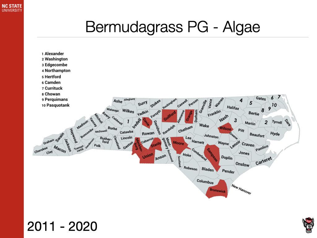 Bermudagrass PG - Algae