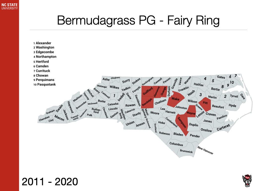 Bermudagrass PG - Fairy Ring