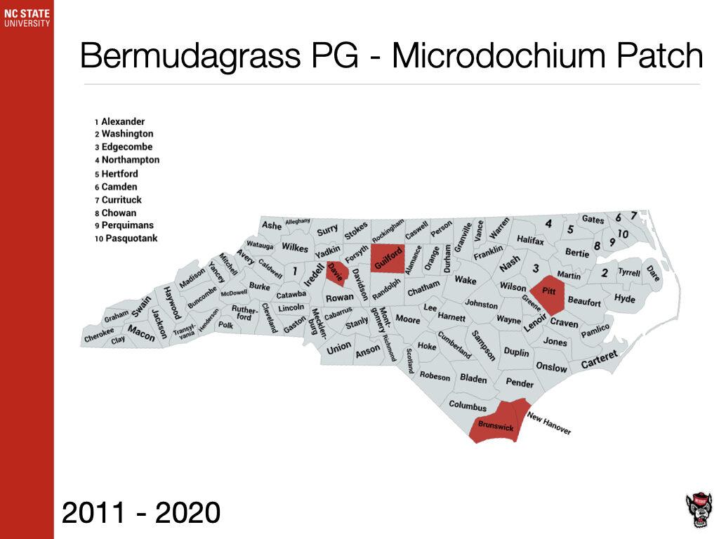 Bermudagrass PG - Microdochium Patch