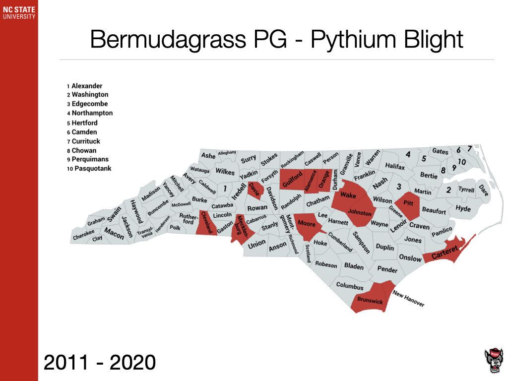 Bermudagrass PG - Pythium Blight