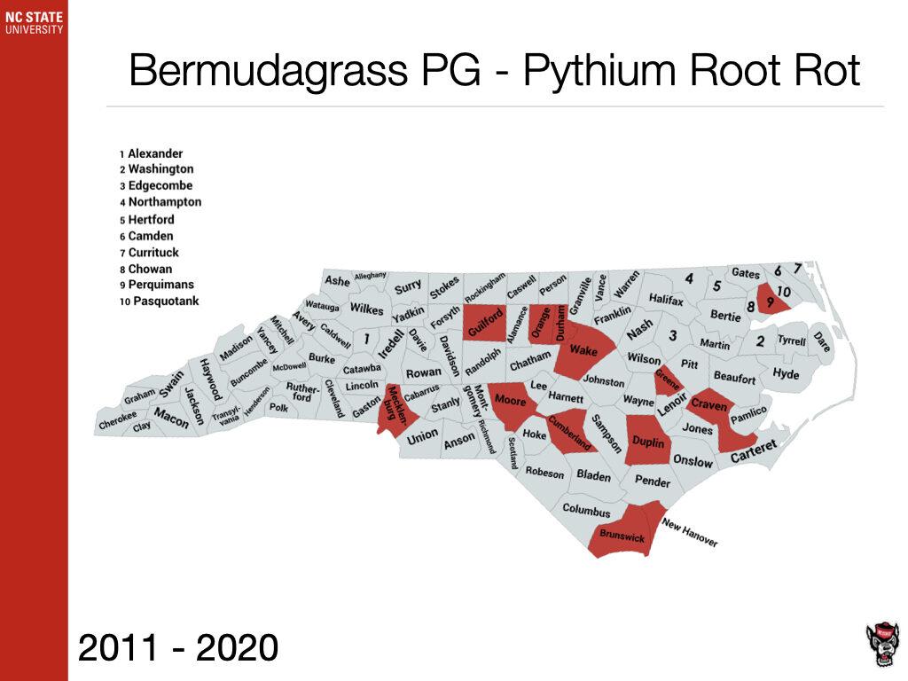 Bermudagrass PG - Pythium Root Rot