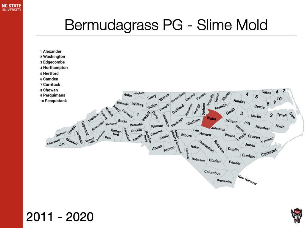 Bermudagrass PG - Slime Mold