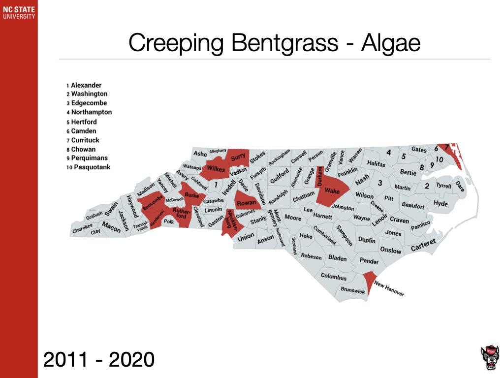 Creeping Bentgrass - Algae