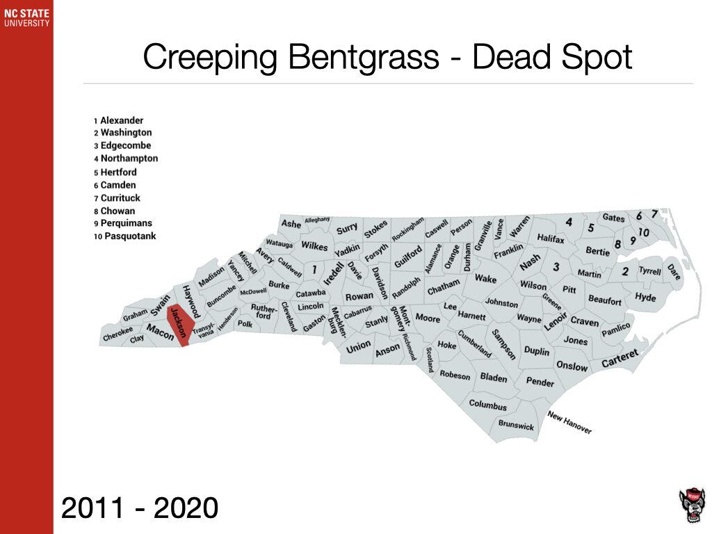 Creeping Bentgrass - Dead Spot