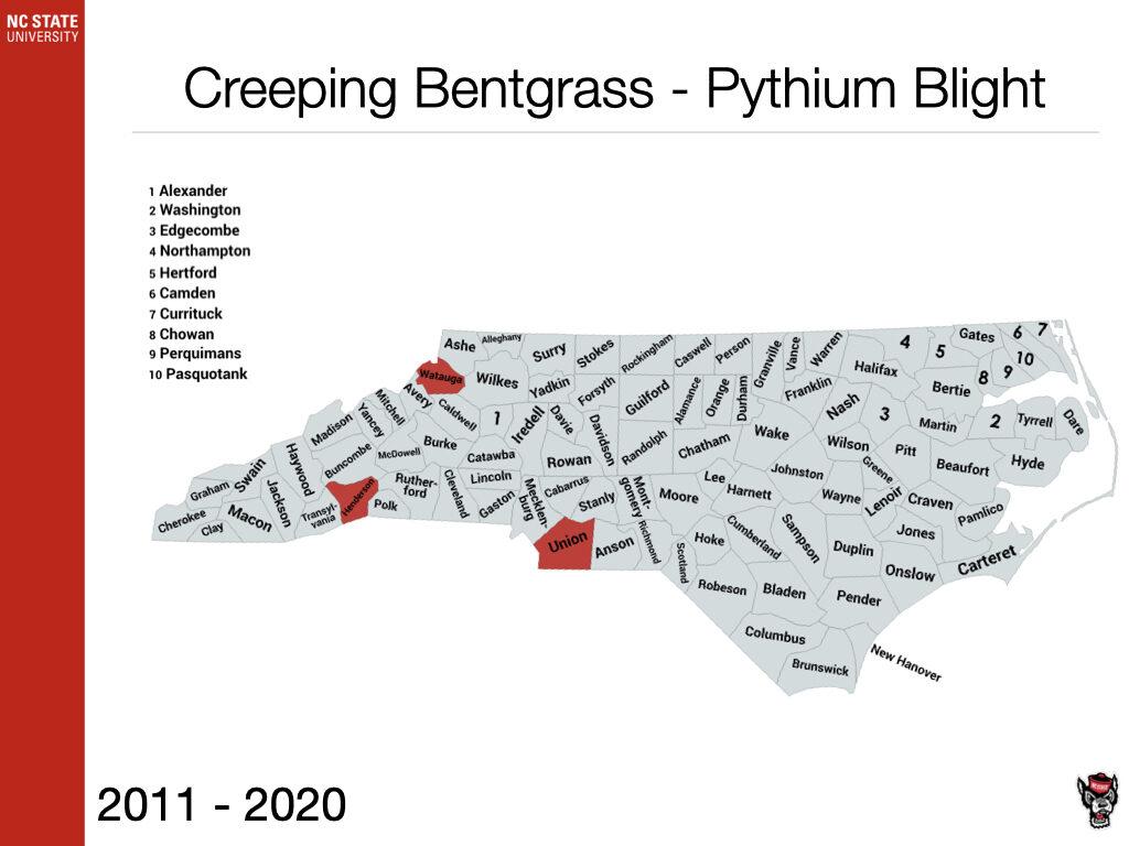 Creeping Bentgrass - Pythium Blight