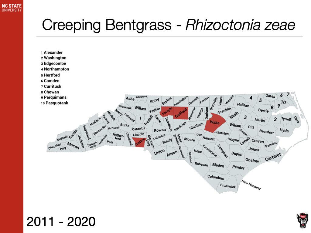 Creeping Bentgrass - Rhizoctonia zeae