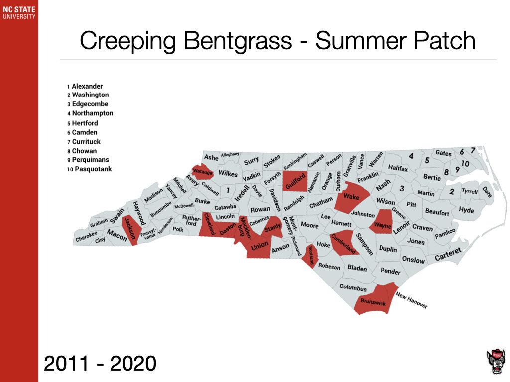 Creeping Bentgrass - Summer Patch