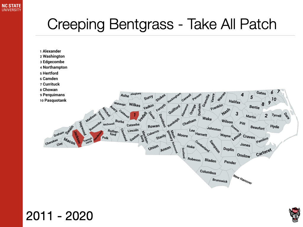 Creeping Bentgrass - Take All Patch