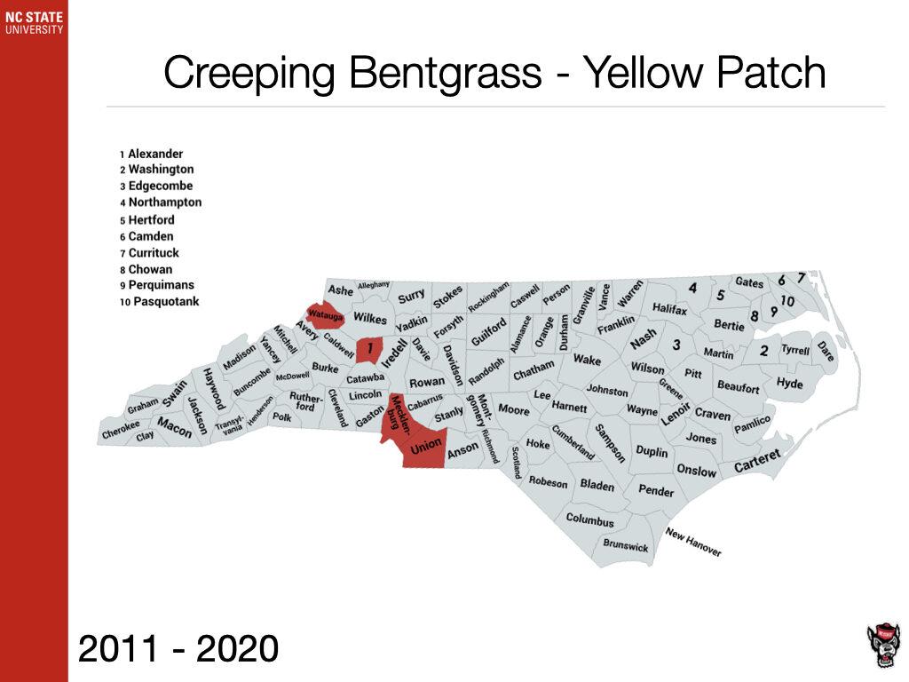 Creeping Bentgrass - Yellow Patch