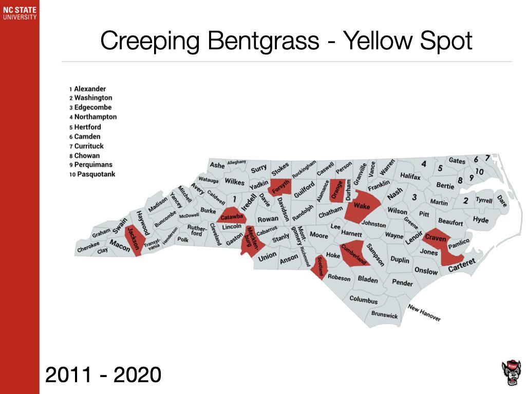 Creeping Bentgrass - Yellow Spot