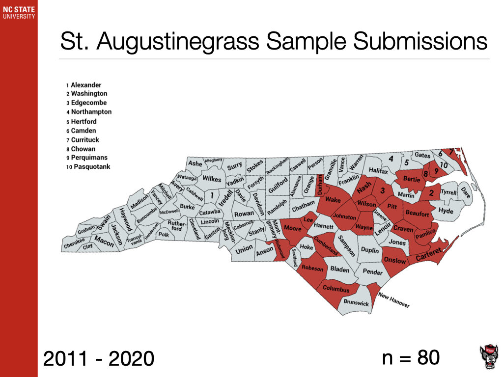 St. Augustinegrass Sample image