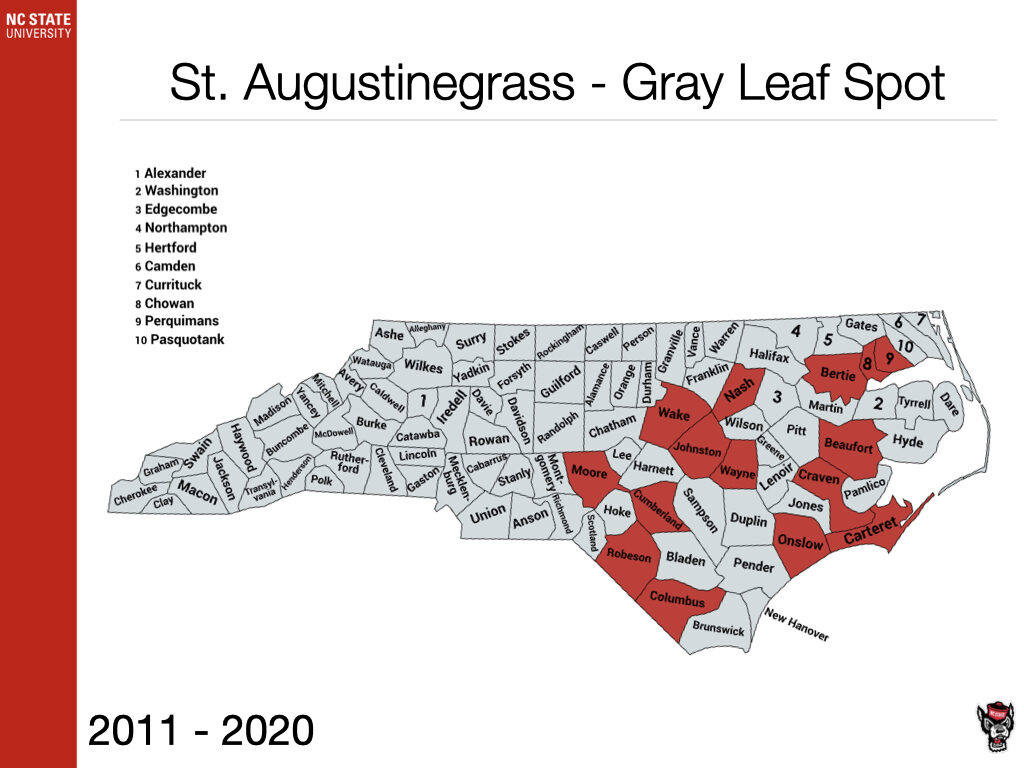 St. Augustinegrass Gray Leaf Spot Sample