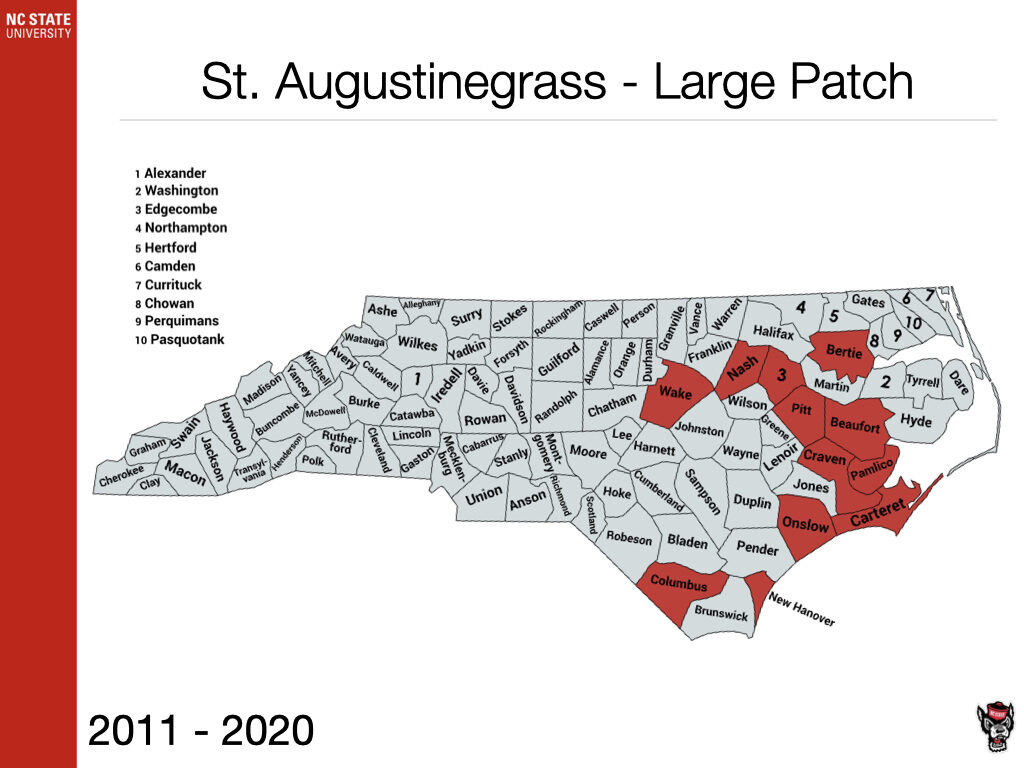 St. Augustinegrass Large Patch Sample