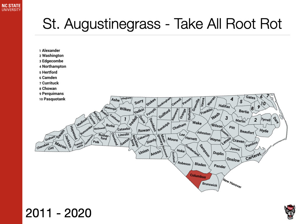 St. Augustinegrass Take All Root Rot Sample