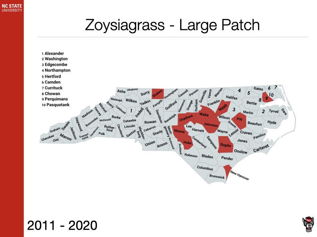 Zoysiagrass Large Patch Sample