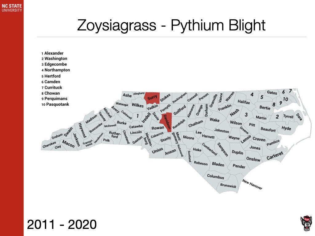 Zoysiagrass Pythium Blight Sample