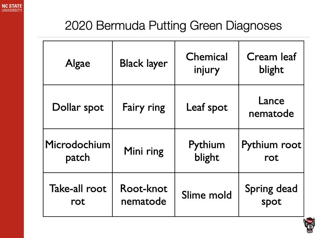 2020 Bermuda DIagnosis chart image